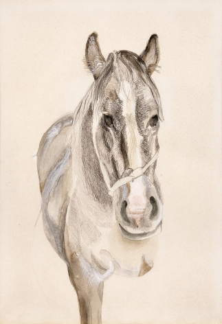Lucian Freud, A Filly
