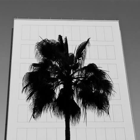 08_CBT_Century-City_PAXTON_Palm-Silhouette_s