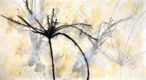 DAVIDOFF-Suzi_Madera_Canyon_charcoal on paper