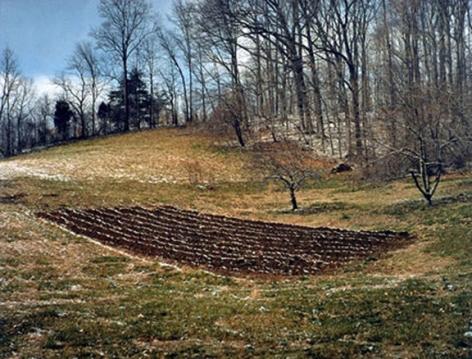 Gray, TN winter garden, 1996 Ektacolor print 20 x 24 inches