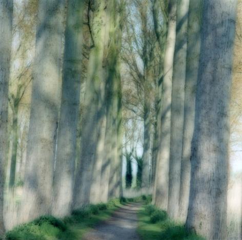 Beloeil, Belgium (4-04-26c-10), 2004,19 x 19,28 x 28,or 38 x 38 incharchival pigment print