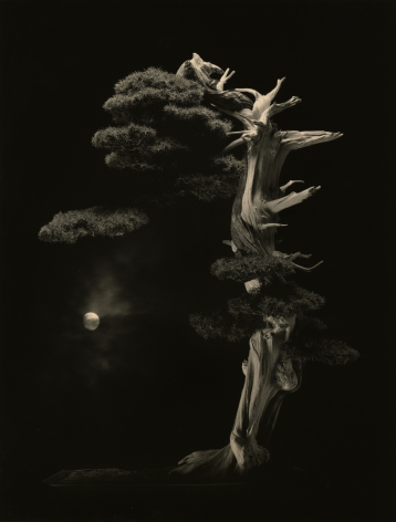 Bonsai #4001, 2018. Gelatin silver print, 13 1/8 x 13 1/4 inches.