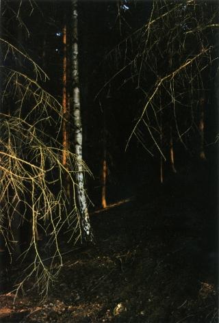 Forest #3, Untitled (Black Light), 2003, 20 x 14 inchchromogenic print