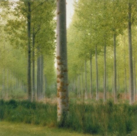 Parc de Jeurre, Morigny-Champigny, France (4-99-2c-2), 1999,19 x 19,28 x 28,or 38 x 38 incharchival pigment print