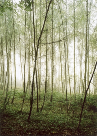 Forest #36, Untitled (Audience), 2003, 24 x 20 inch chromogenic print