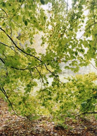 Jitka Hanzlovà, Leaf Curtain, 2001 Chromogenic print 16 x 12 inches Edition 2 of 8