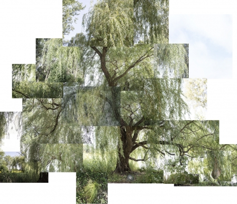 Willow Tree, chicago, Jackson Park,September, 2020, Archival pigment print, 40 x 50 inches.