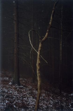 Forest #4, Untitled (Dead Tree Dancing), 2005, 10 1/2 x 7 inch chromogenic print