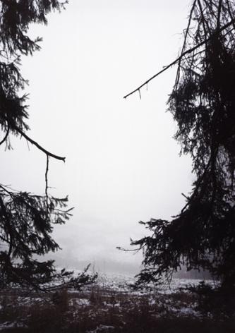 Forest #30, Untitled (Split), 2005, 24 x 20 inch chromogenic print