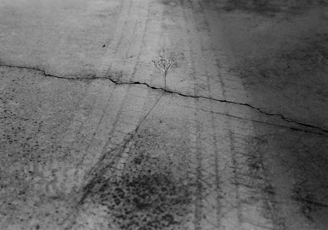 Knoxville, TN (weed in crack) 1992 Gelatin silver print, please inquire for available sizes
