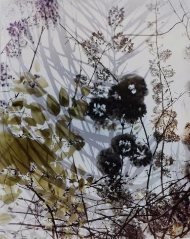 Reverberation,2016, 50 x 41inch chromogenic print