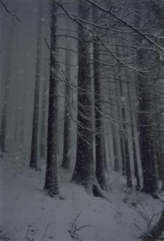Forest #2, Untitled (Snow Storm),2000, 16 x 12 inch chromogenic print