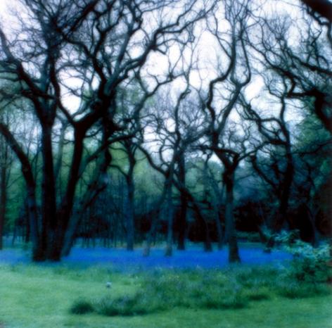 Parc de Bagatelle, France (5-95-2c-8), 1995,19 x 19,28 x 28,or 38 x 38 incharchival pigment print