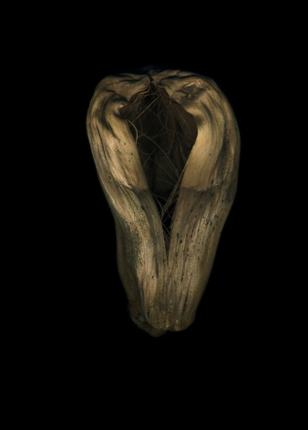 Flowers #7, Untitled (Cocoon), 2011, 7 x 10inch archival pigment print
