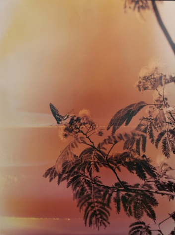 Butterfly #5, from the series Wildlife Analysis, 2011, 40 x 30 inch chromogenic print
