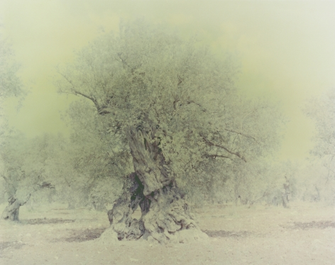 Olive 16, from the seriesGhost, 2003, 39 1/2 x 31 1/2 inch archival pigment print
