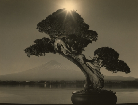 Bonsai #4018, 2019. Gelatin silver print, 11 x 14 inches.