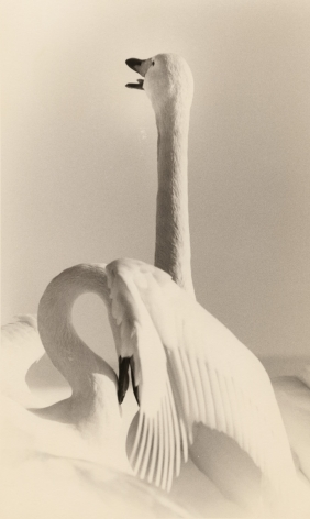Untitled #1627 from the series Kawa=Flow, 9 x 5.5 inch gelatin silver print