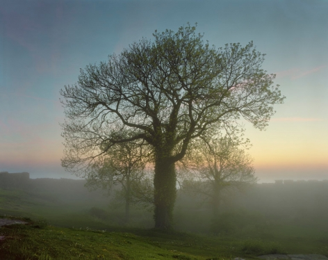 Oak of the Hammerhouse, Sweden, 2006. Archival pigment print. Available at 40 x 30 inches, edition of 10, or 50 x 40 inches, edition of 5, or 60 x 50 inches, edition of 3, or 90 x 70 inches, edition of 3