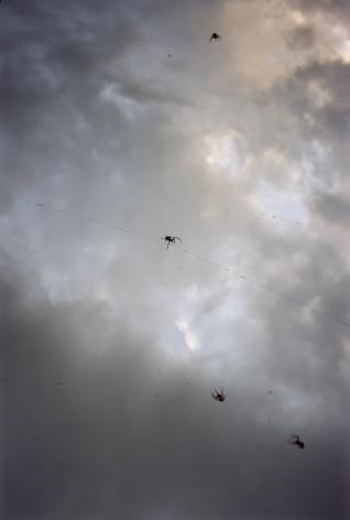 Forest #25, Untitled (Tightrope Walker), 2002, 10 1/2 x 7 inch chromogenic print