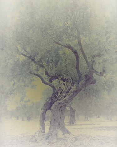 Olive6, from the seriesGhost, 2003, 39 1/2 x 31 1/2 inch archival pigment print
