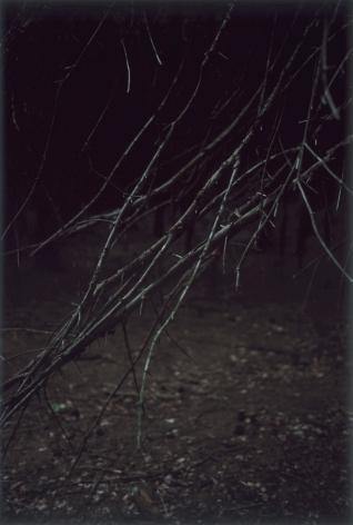 Forest #5, Untitled (SharpFingers), 2004, 10 1/2 x 7 inch chromogenic print