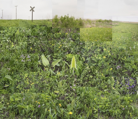A Small Central Illinois Prairie,May, 2018. Archival pigment, 40 x 50 inches.