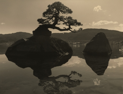 Bonsai #4036, 2019. Gelatin silver print, 10 3/16 x 13 1/4 inches.