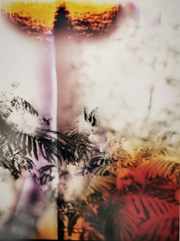 Butterfly #7, from the series Wildlife Analysis, 2011,40 x 30 inchchromogenic print