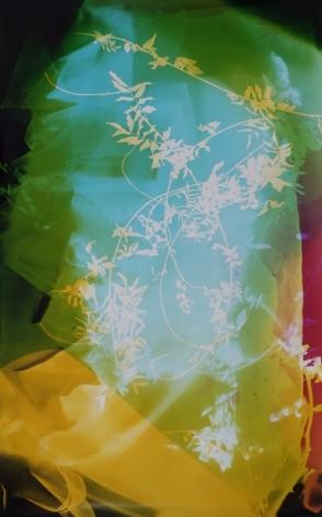 Field Recording (Sun Room IV), 2016, 64 x 41 inches, Chromogenic print, Unique
