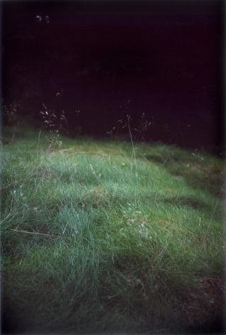 Forest #6, Untitled (Singing Grass), 2004, 10 1/2 x 7 inch chromogenic print