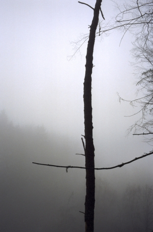 Forest #43, Untitled (Black Cross), 2004, 10 1/2 x 7 inch chromogenic print