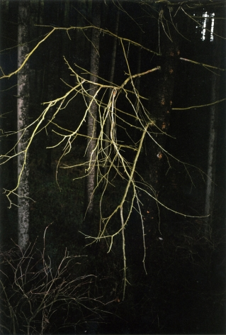 Forest #38, Untitled (Antlers), 2005, 20 x 14 inch chromogenic print