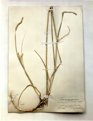 Field Museum, Andropogon, 1893, 2000. Archival pigment print, 24 x 20 inches.