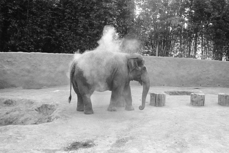 Mark Steinmetz, Los Angeles Zoo, 1983. Gelatin silver print, 20 x 24 inches.