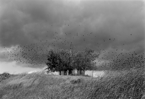 Near Jefferson City, Tennessee 1991 Gelatin silver print, please inquire for available sizes