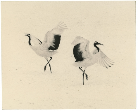 Untitled #1656 (from the series Kawa=Flow), 2012, Gelatin silver print, Edition 2 of 20