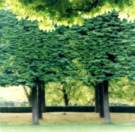Parc de Sceaux, France (4-07-2c-8),2009,19 x 19,28 x 28,or 38 x 38 incharchival pigment print