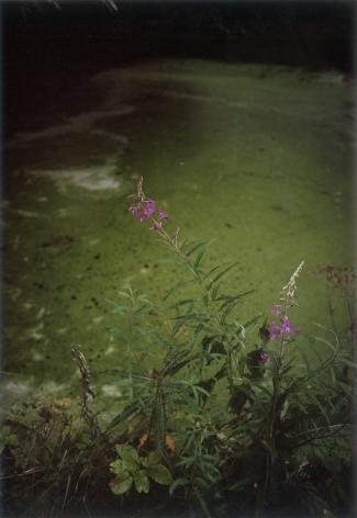 Forest #28, Untitled (Green Mirror), 2004, 20 x 14 inch chromogenic print