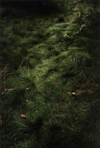 Forest #12, Untitled (Grass Path), 2003, 20 x 14 inch chromogenic print