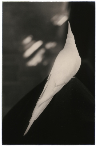 Untitled #1027 (from the series Nakazora), 2003, Gelatin silver print, Edition 21 of 40