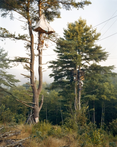Tree-Sits,2017. Chromogenic print.