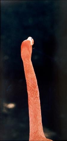 "Esko Männikkö, ""Untitled (Flamingo I),"" from the series ""Harmony Sisters,"" Chromogenic print, 42 1/2 x 22 7/8 inches, Edition of 20"