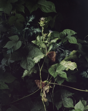 Photograph by Sharon Core from the series Understory of a close-up garden scene with leaves, plants, and butterflies.