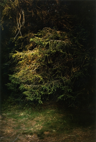 Forest #9, Untitled (The Wing), 2003, 20 x 14 inch chromogenic print