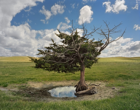 Homesteaders Tree, Cherry County, 2011.From the series Dirt Meridian. Archival pigment print.