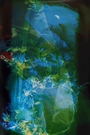 Field Recording (Sun Room I), 2016, 60 x 41 inch unique chromogenic print