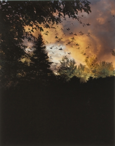 Field at Dusk #2, from the series Wildlife Analysis, 2008,20 x 16 or 24 x 20 inch chromogenic print