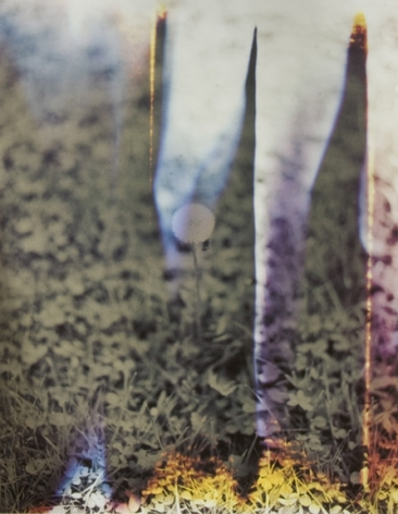 Dandelion #1, from the series Wildlife Analysis, 2008,18 x 14or 24 x 20 inchchromogenic print