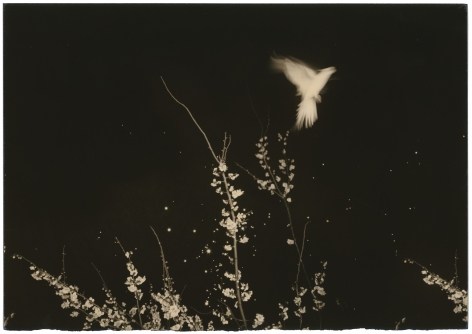 Untitled #1154 (from the series Nakazora), 2002, Gelatin silver print, Edition 24 of 40